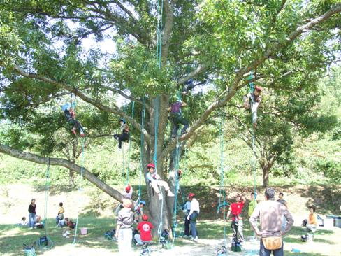 みんなで木登り