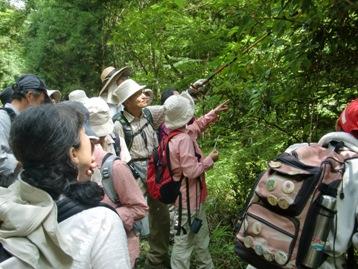 林道沿いの様々な植物を鑑賞