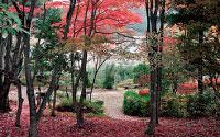 愛鳥林エリア紅葉の散策路