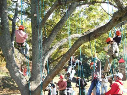 大人木登り体験