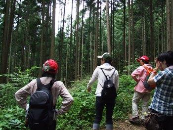 針葉樹林の中を林道沿いに歩く