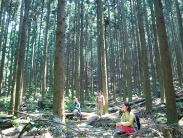 杉林に入り、腰を下ろして座観