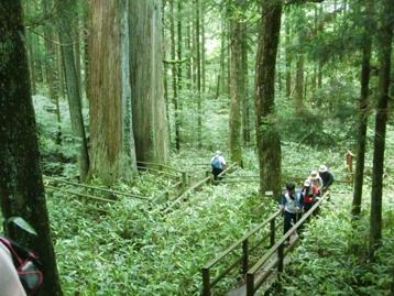 「森の巨人たち100選 三本杉」に到着