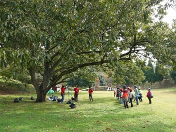 大きなクヌギの木がある広場