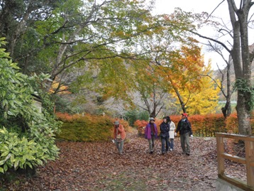 色とりどりの地面は、色とりどりの落ち葉のカーペット