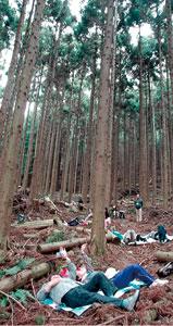 森に寝ころぶ体験