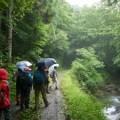 森の案内人と歩く〜セラピーロード自然観察〜(7月7日)