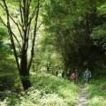森の案内人と歩く〜セラピーロード自然観察〜(9月8日)