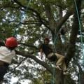 森と遊ぼう~木登り体験(9月29日)