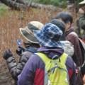 セラピーロード自然観察~春爛漫の大原湖7kmウォーク~(4月20日)