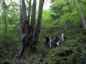 森の巨人を訪ねました
