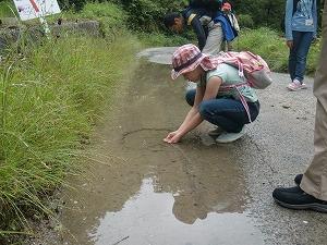 水たまりにオタマジャクシ発見