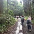 セラピーロード自然観察~滑三本杉と水音回廊~(6月8日)