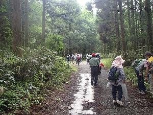 滑林道を約6km歩きました
