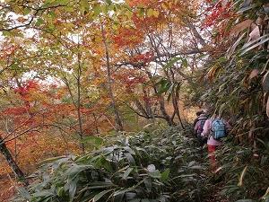 森林セラピー基地の最深部、飯ヶ岳に登ります